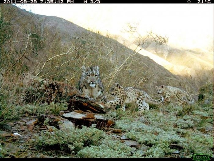 Интересные снимки, сделанные фотоловушками