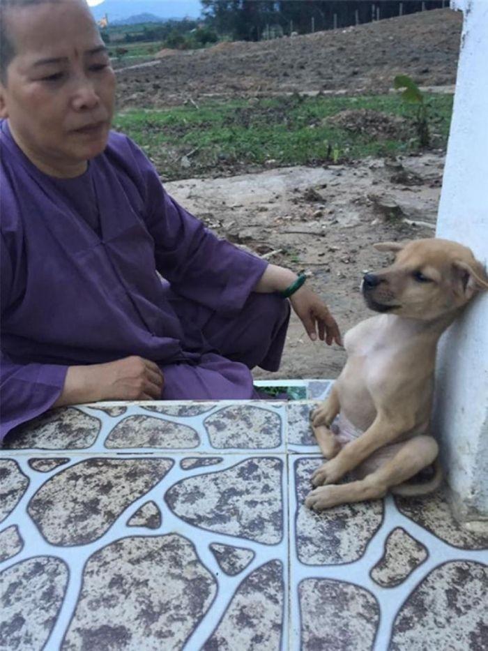Буддистские монашки приютили двух обнимающихся щенков