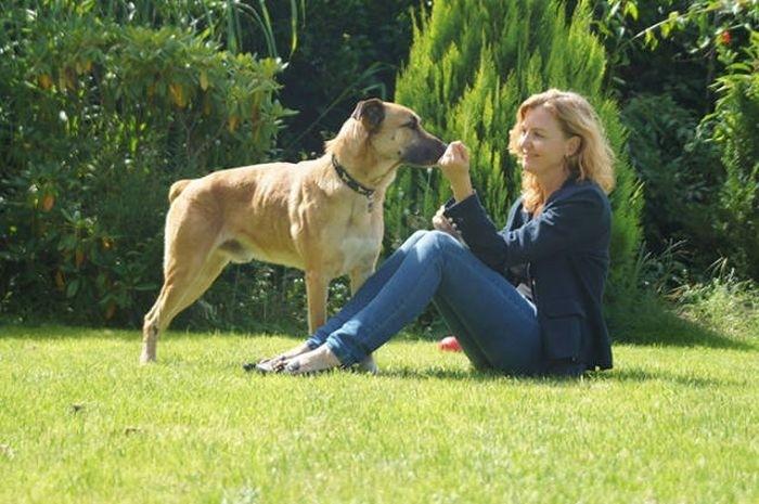 Стюардесса из Германии забрала бездомного пса, который полгода ждал ее у отеля