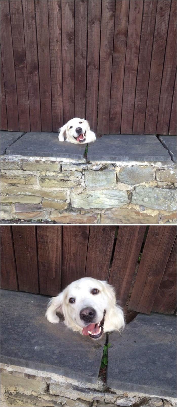 Забавные псы