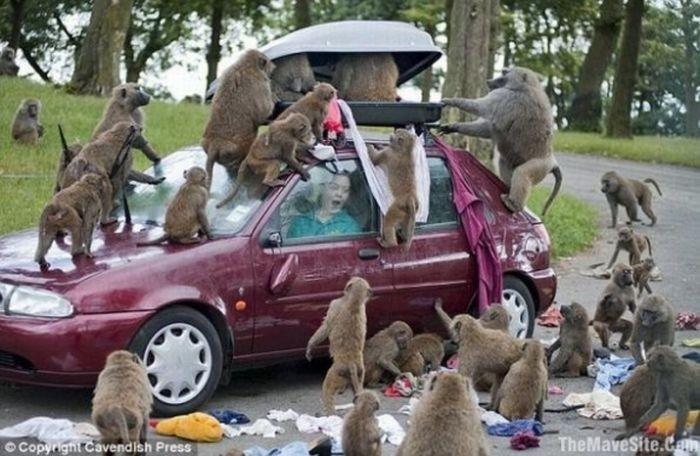 Животные и автомобили (21 фото)