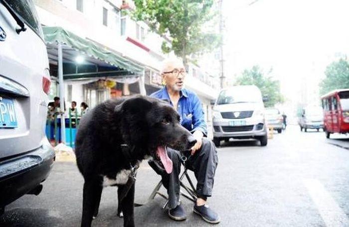 Пожилой китаец завещал все свои деньги собаке