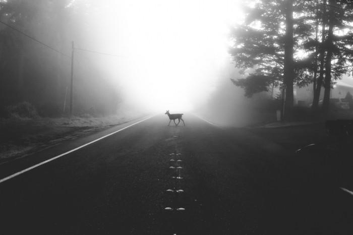 Дилан Ферст: не жизнь, а мечта