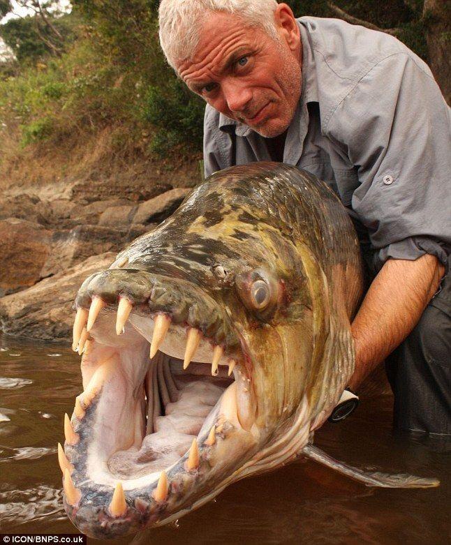 Рыба - крокодил (3 фото)