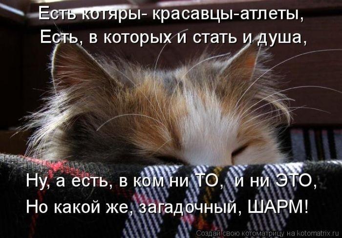 Забавные котоматрицы