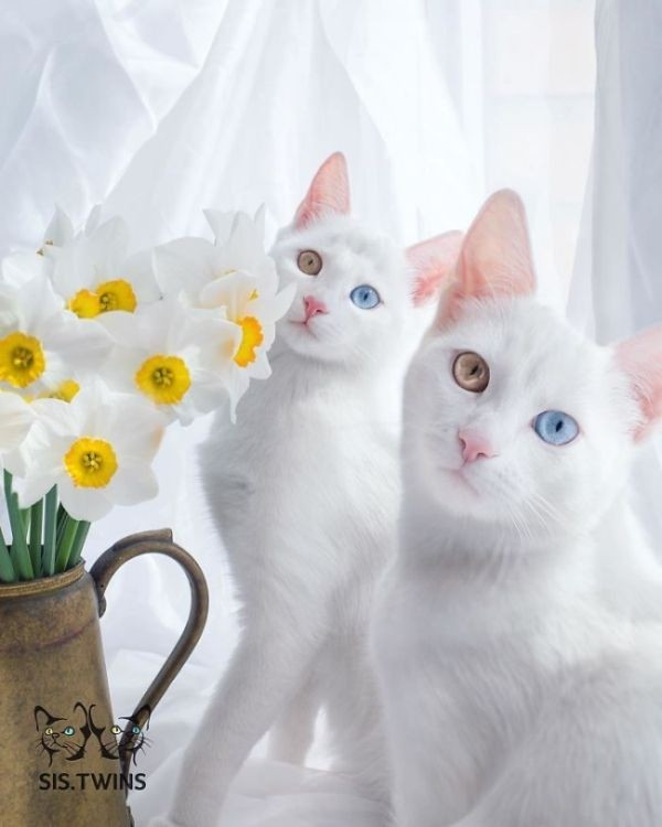 Подборка самых красивых кошек
