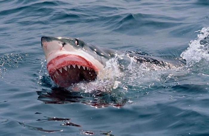 Серфер убил акулу собственной откушенной ногой (2 фото)