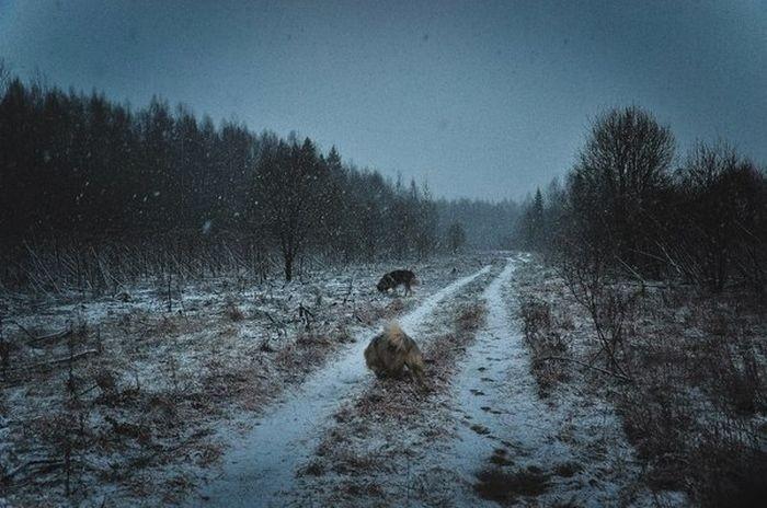 Какая разная может быть погода на северо-западе России