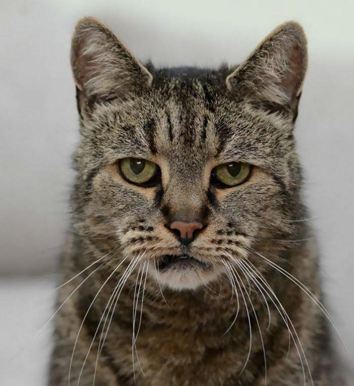Самый старый в мире кот отметил день рождения