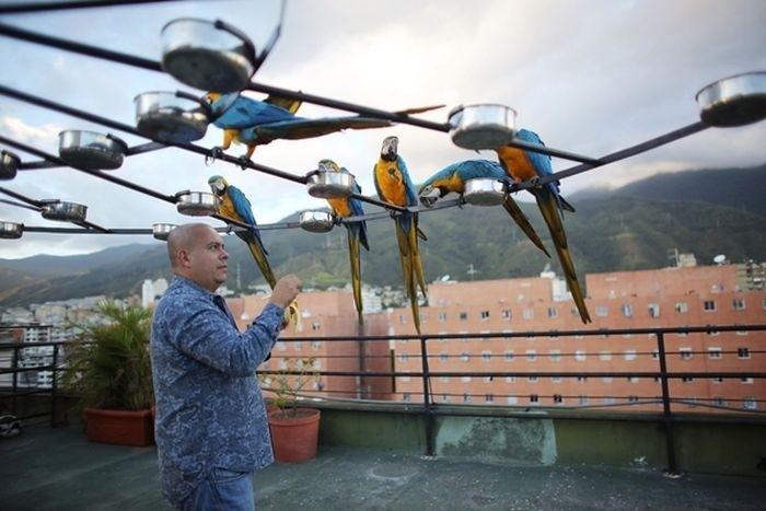 Обычные городские птицы Венесуэлы