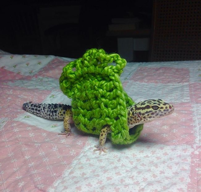 Милые животные в свитерах