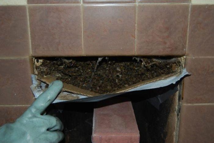 Пчелы, поселившиеся в камине