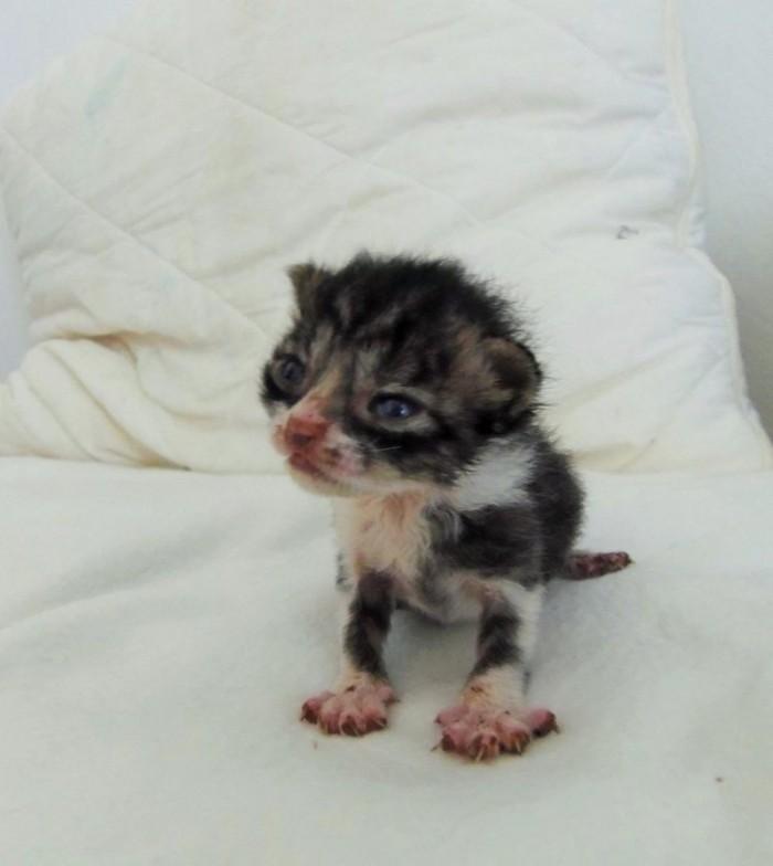 Спасение крошечного котенка
