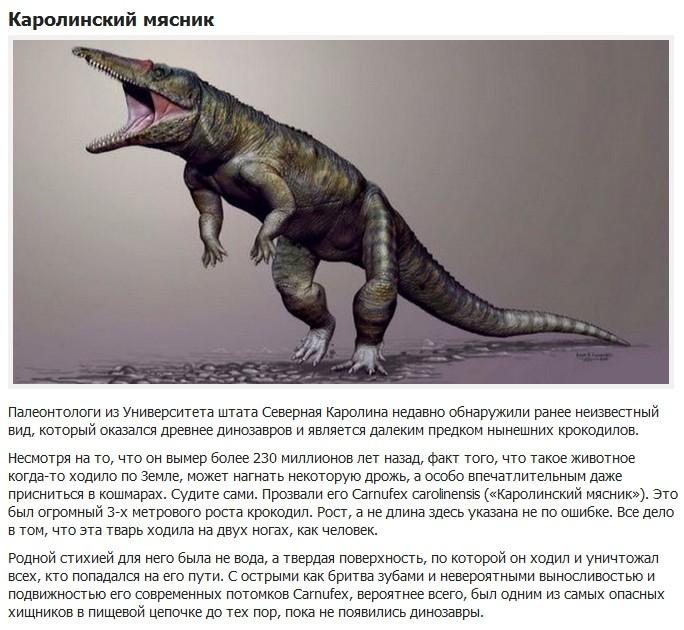 10 вымерших животных с необычными особенностями