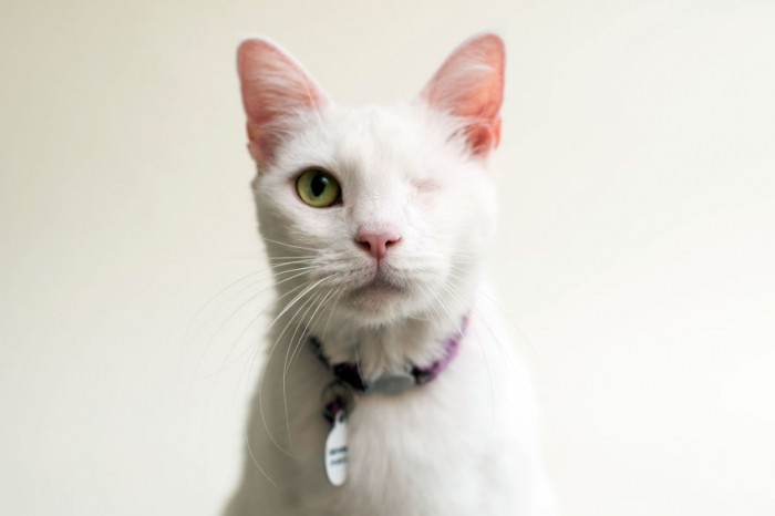 Фотограф снимает слепых котов, чтобы помочь им найти хозяев
