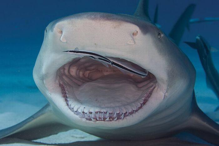 Жуткие акулы (14 фото)