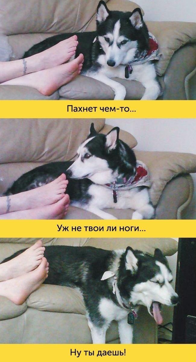 15 доказательств, что в каждой собаке живет великий актер (15 фото)