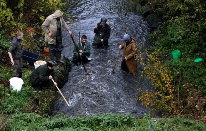 Традиционная ловля карпа в Чехии