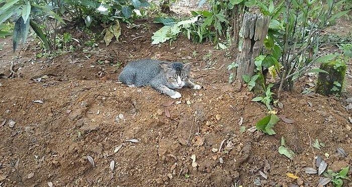 В Индонезии кошка целый год прожила у могилы хозяйки