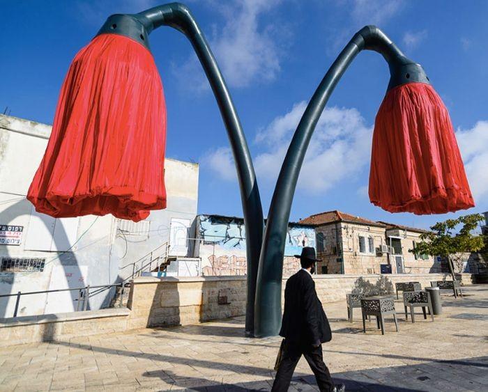 Распускающиеся тюльпаны на улицах Иерусалима (6 фото)