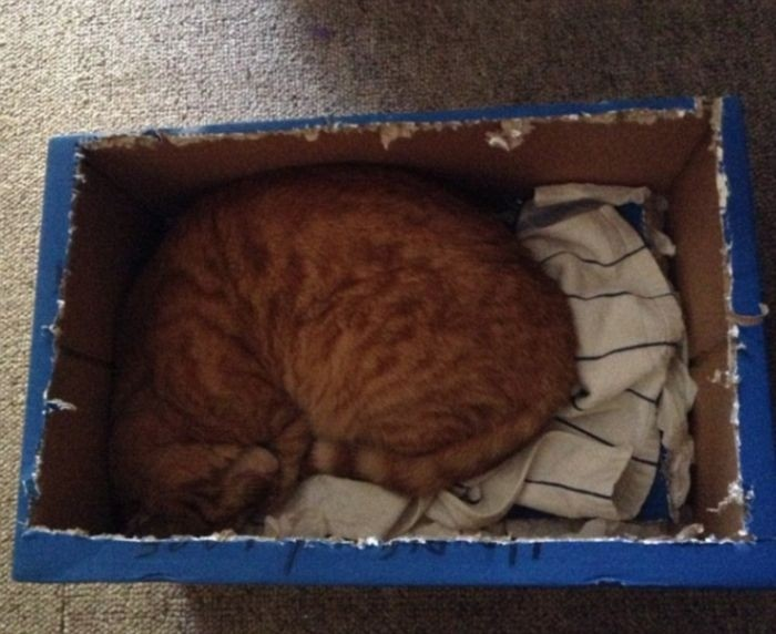 Кошки в коробках