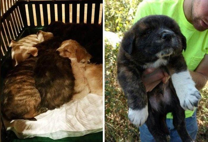 Лесной мальчишник превратился в заботу о бездомных щенках