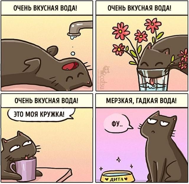 Как меняется жизнь с появлением в доме кота