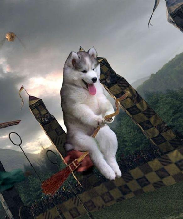 Собака на пальме стала героиней фотожаб