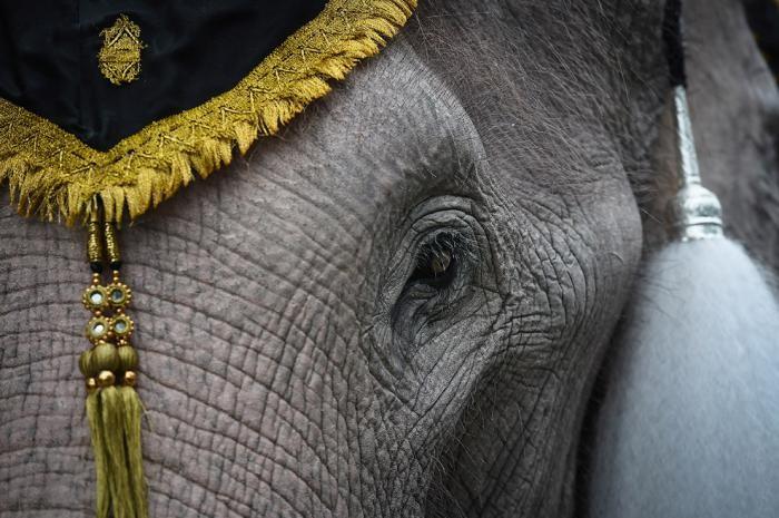 Слоны почтили память короля (11 фото)