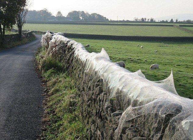Тысячи пауков оплели паутиной британскую ферму