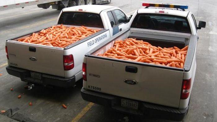 Партию марихуаны попытались перевезти через границу в куче моркови (2 фото)