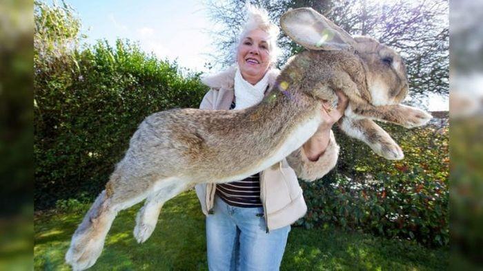 Аномально крупные животные (10 фото)