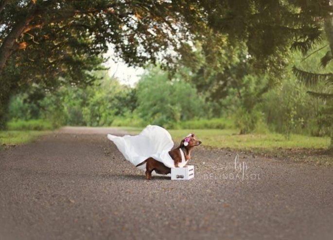 Свадебная фотосессия для беременной таксы