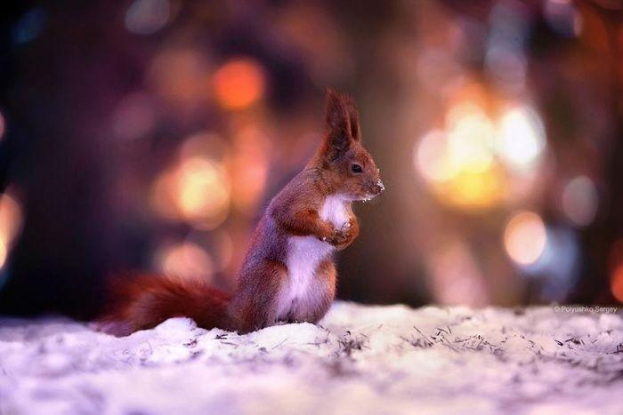 Фотографии животных от Сергея Полюшко