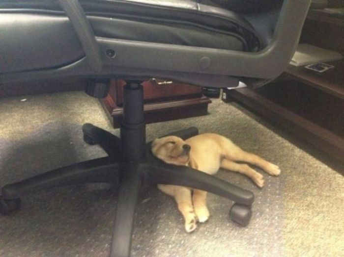 Спящие щенки