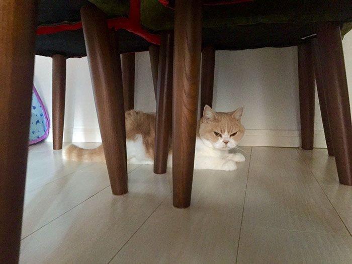 Кошка Коюки - новая звезда Интернета