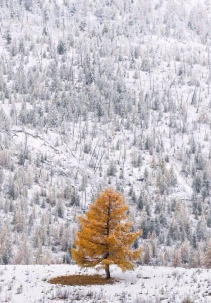 Волшебные зимние фото