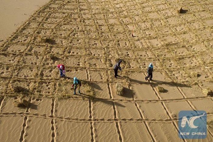 «Зеленый пояс» остановит расширение китайской пустыни Тэнгэр (4 фото)