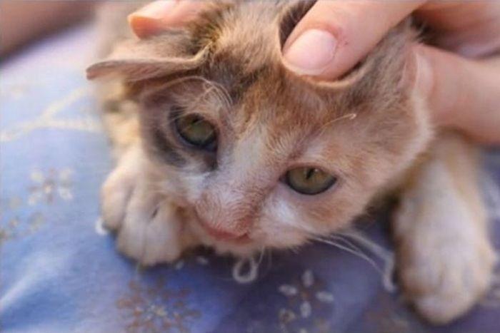 Девочка спасла от неминуемой смерти несчастного котенка