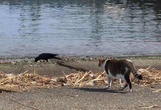 Охота одного кота (5 фото)
