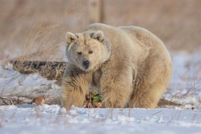 Медведица 30 лет ждала от людей человеческого отношения (11 фото)