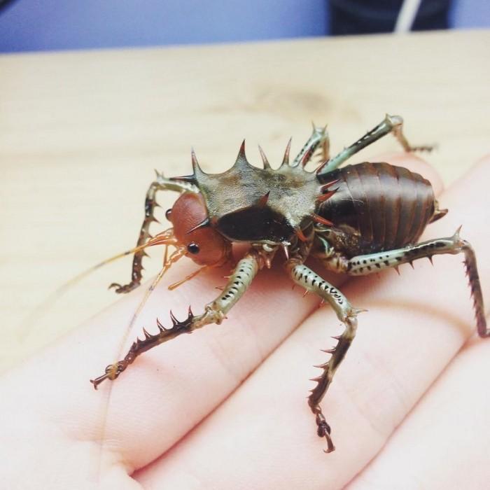 Парень очень любит экзотических насекомых