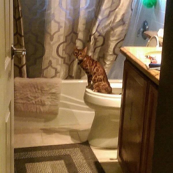 Туалетный юмор