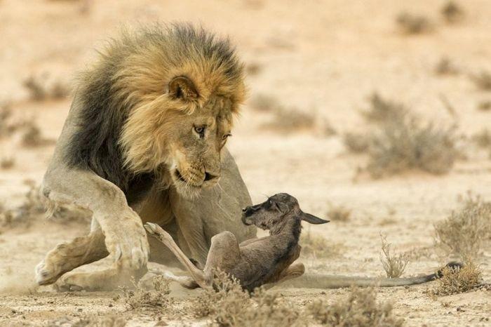 Фото дикой природы конкурса Wildlife Photographer 2016
