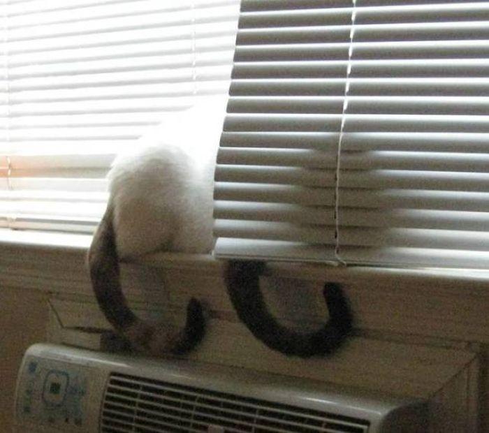 Кошки-повторюшки