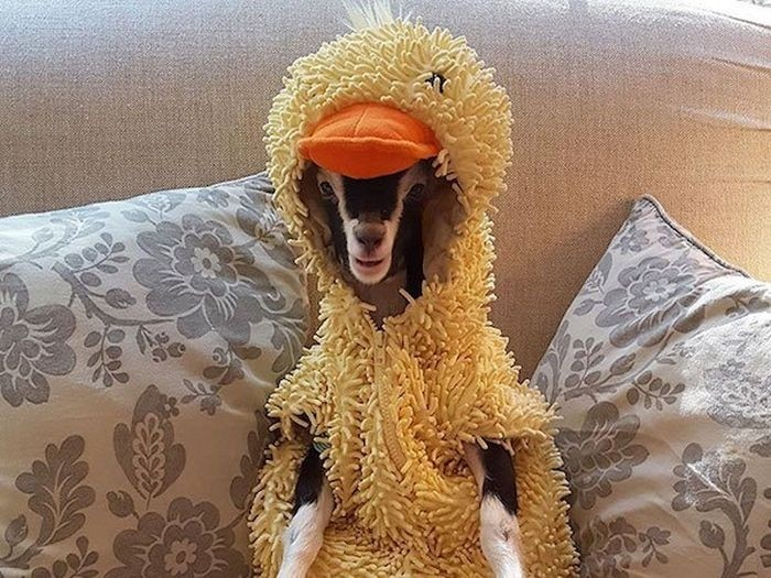 Подборка смешных фото с животными