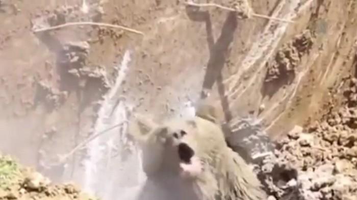 Турецкие рабочие копали яму и выкопали медведя