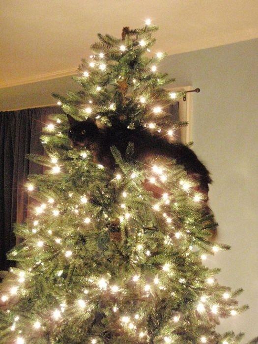 Коты на елках и под елками