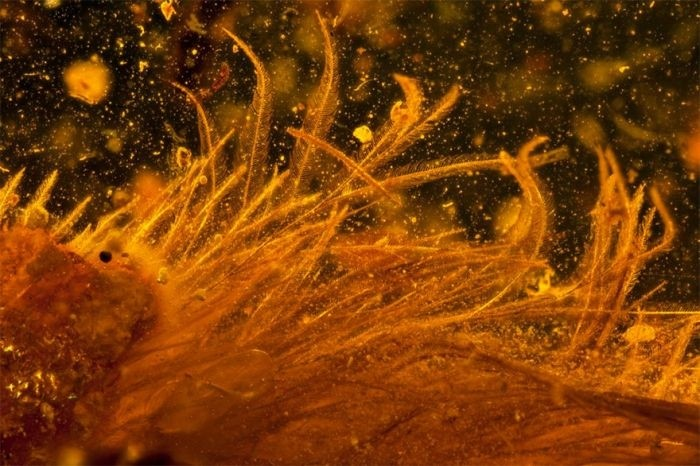 В янтаре нашли хвост динозавра, жившего 99 миллионов лет назад