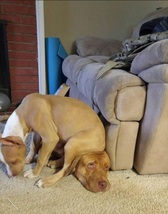 Собаки, которым плевать на личное пространство других